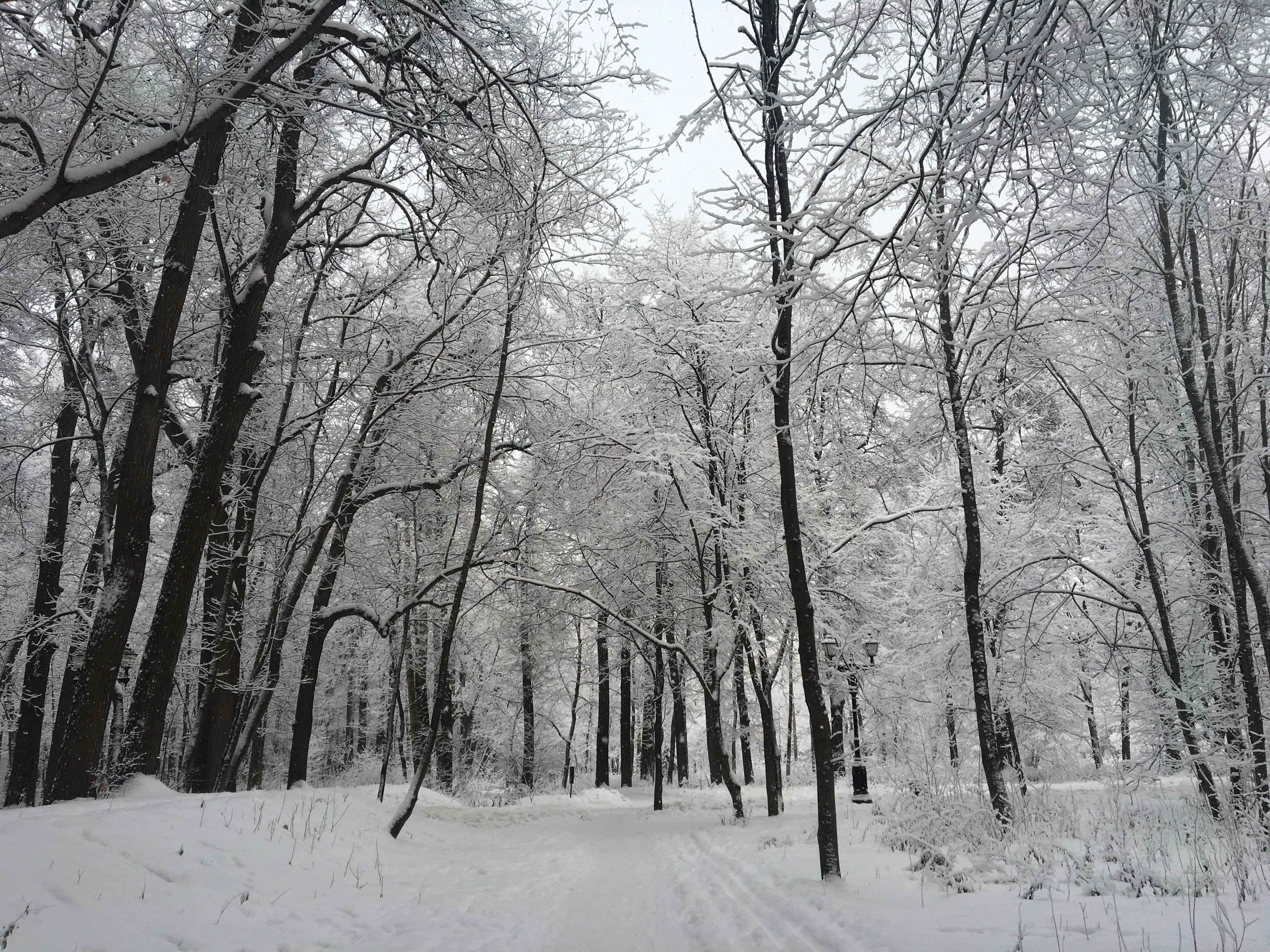 Озеленение территории хутора Ильичевка проведут в весенний период 2019 года