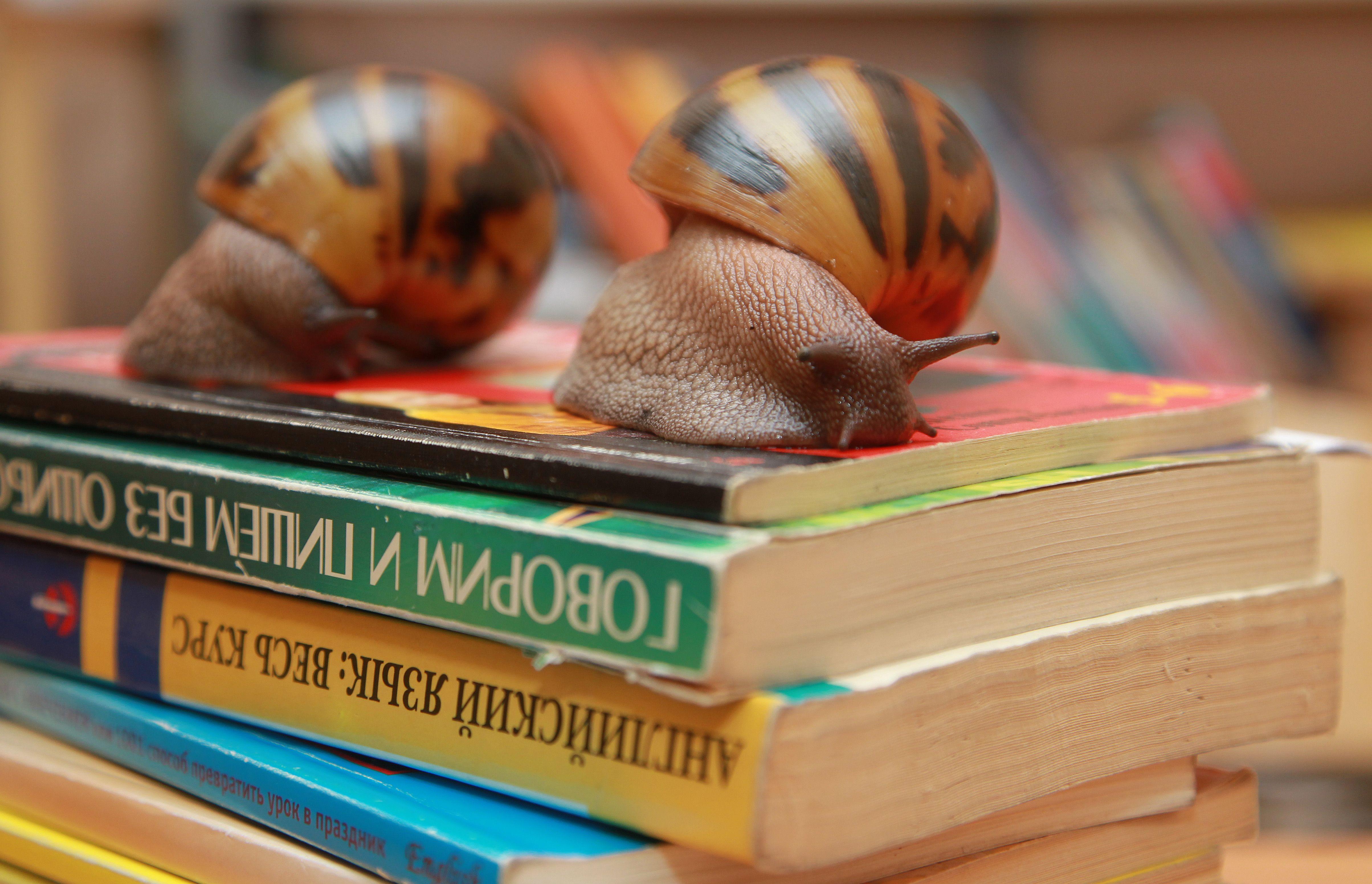 Дети из Роговского проверят свои знания в интеллектуальной игре