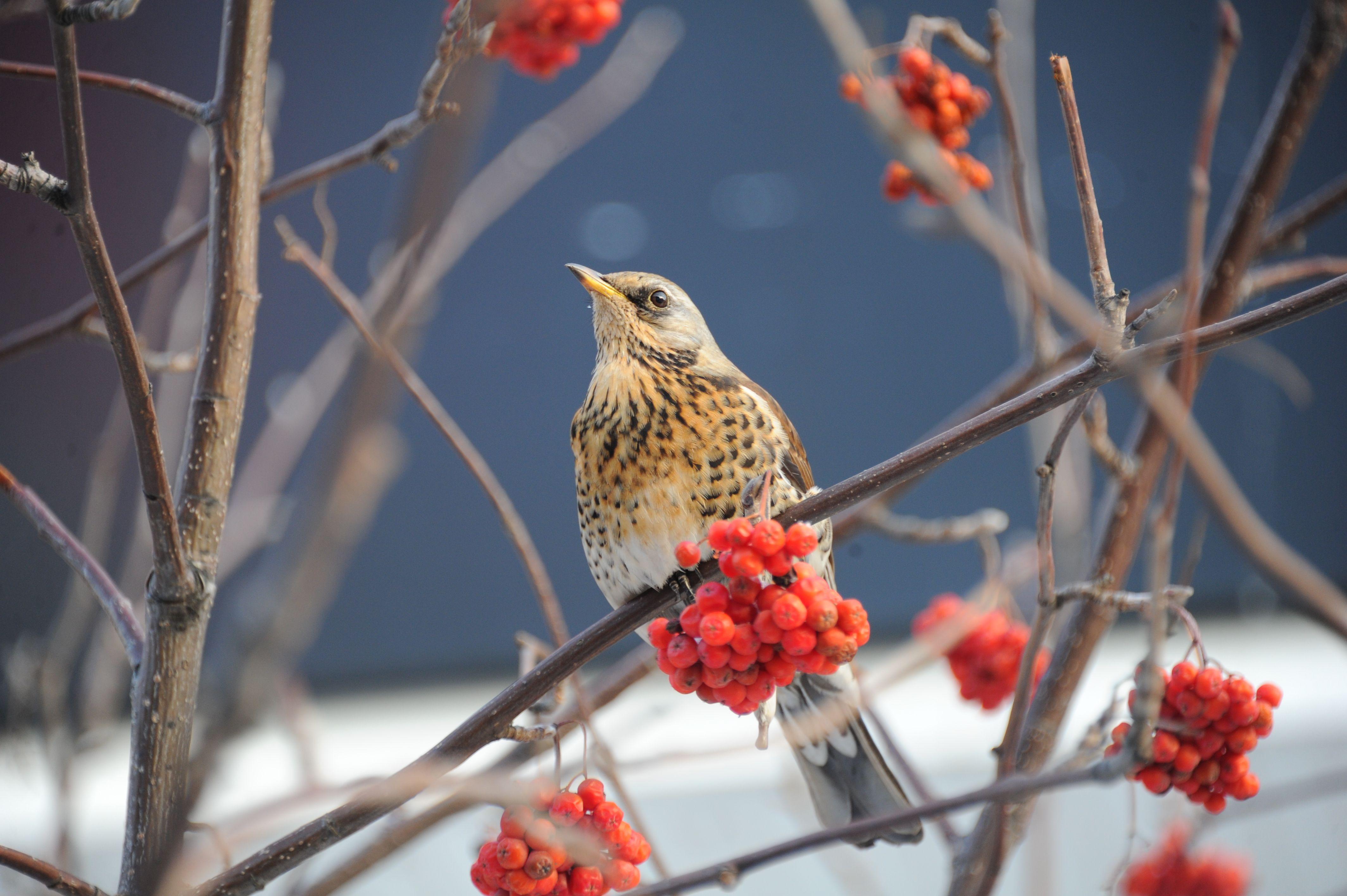 Голосование ко Дню птиц стартовало в Москве