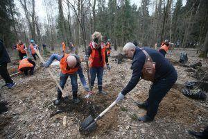 Активные горожане сажают молодое дерево. Фото: Владимир Смоляков