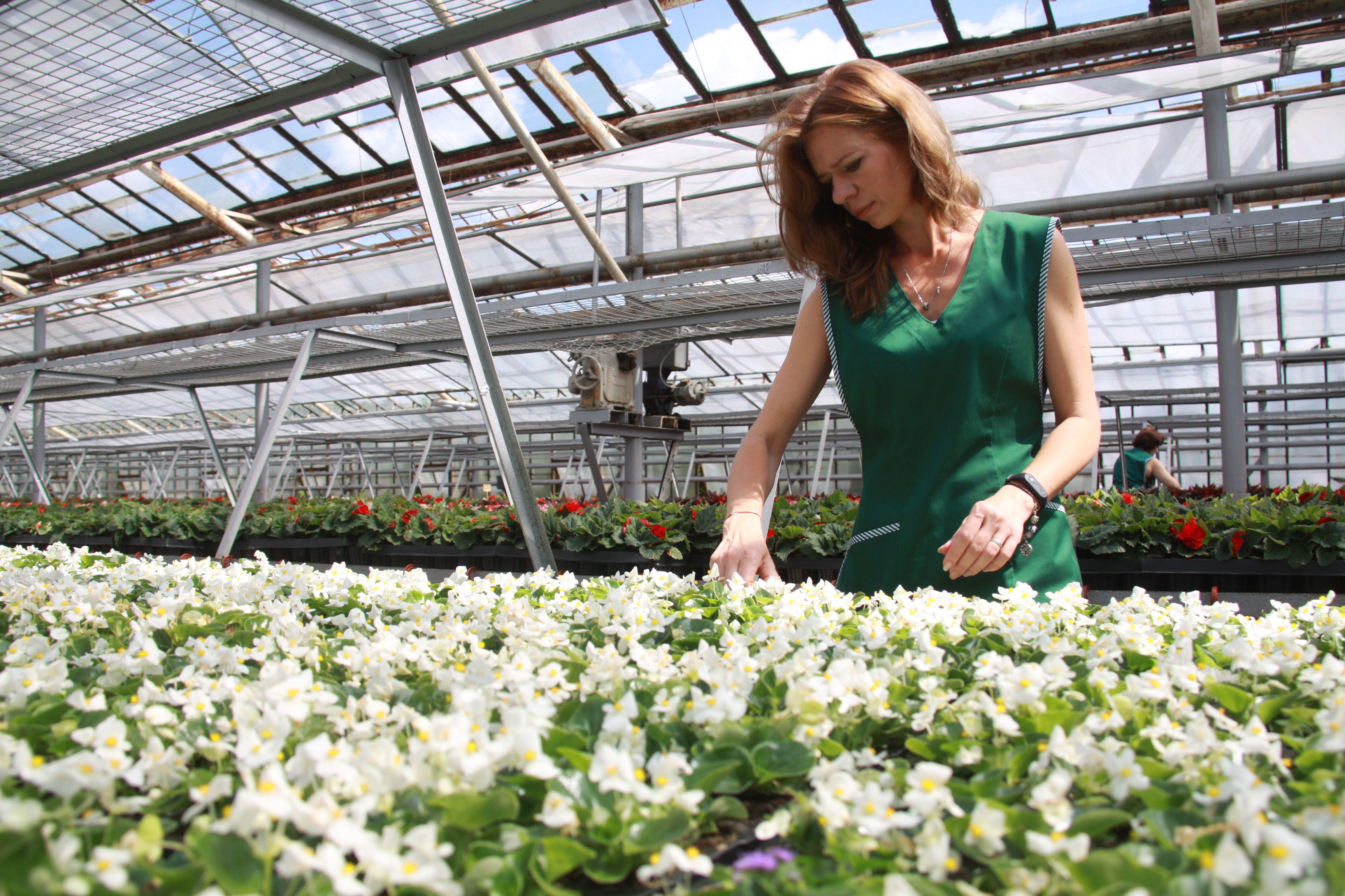 Однолетние цветы украсят поселок Шишкин Лес