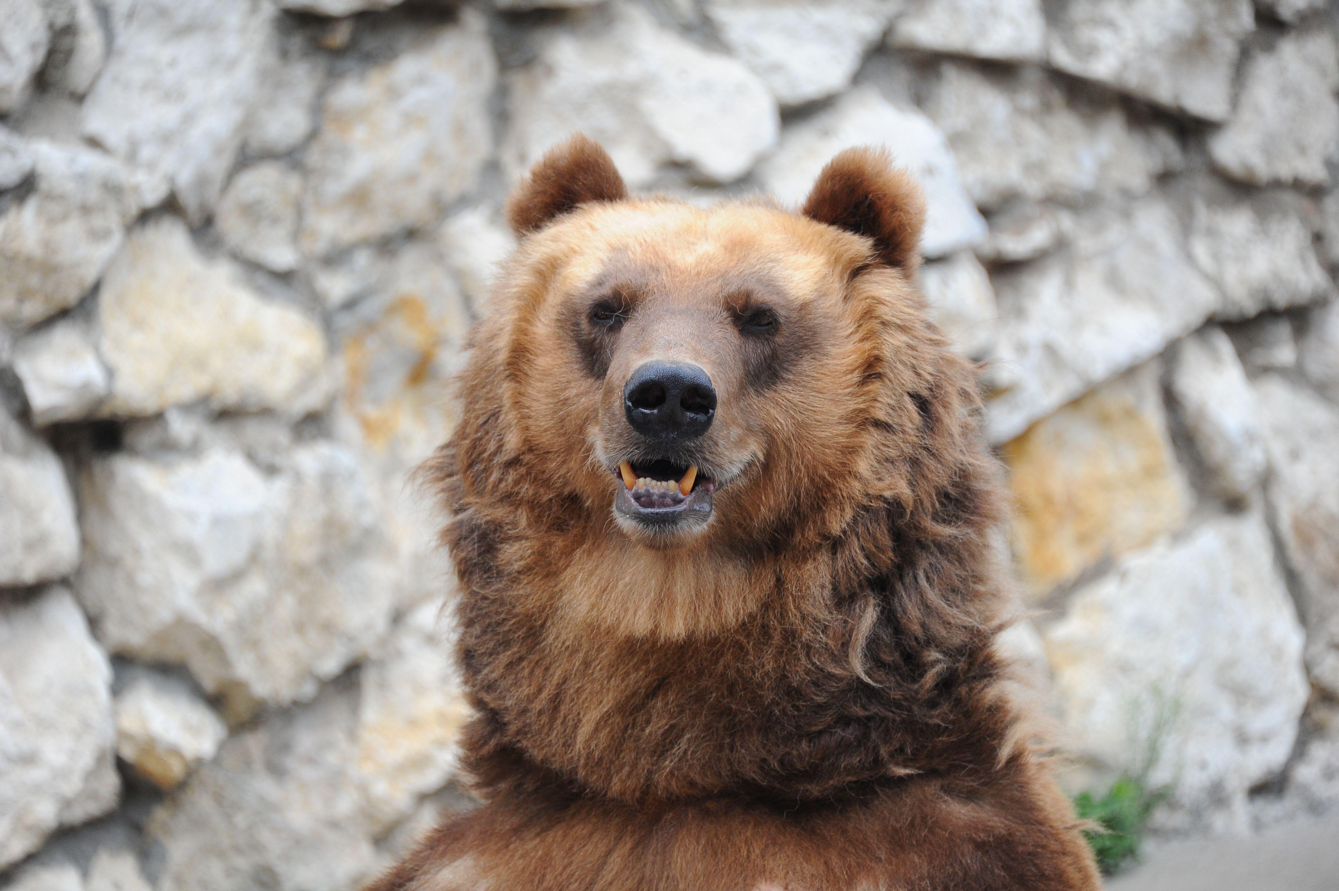 Медведи Московского зоопарка покинули зимние берлоги