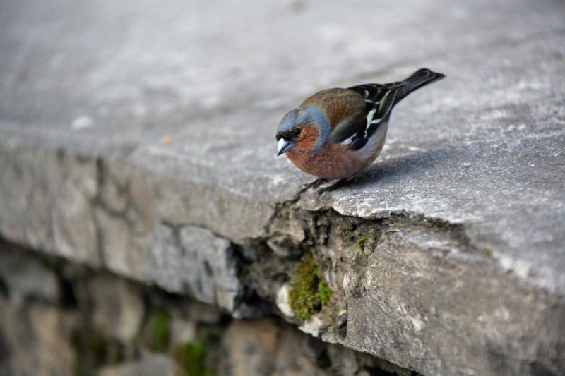Аппликации на фасаде зданий помогут спасти птиц