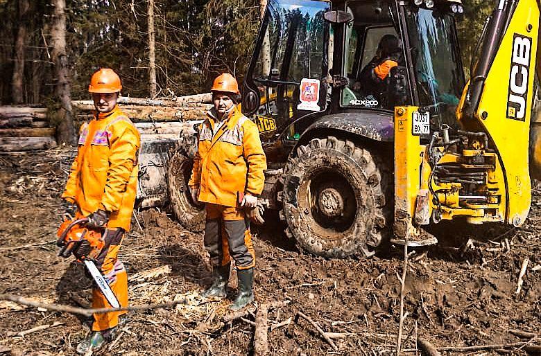 Новофедоровский лес очистят от сухостоя