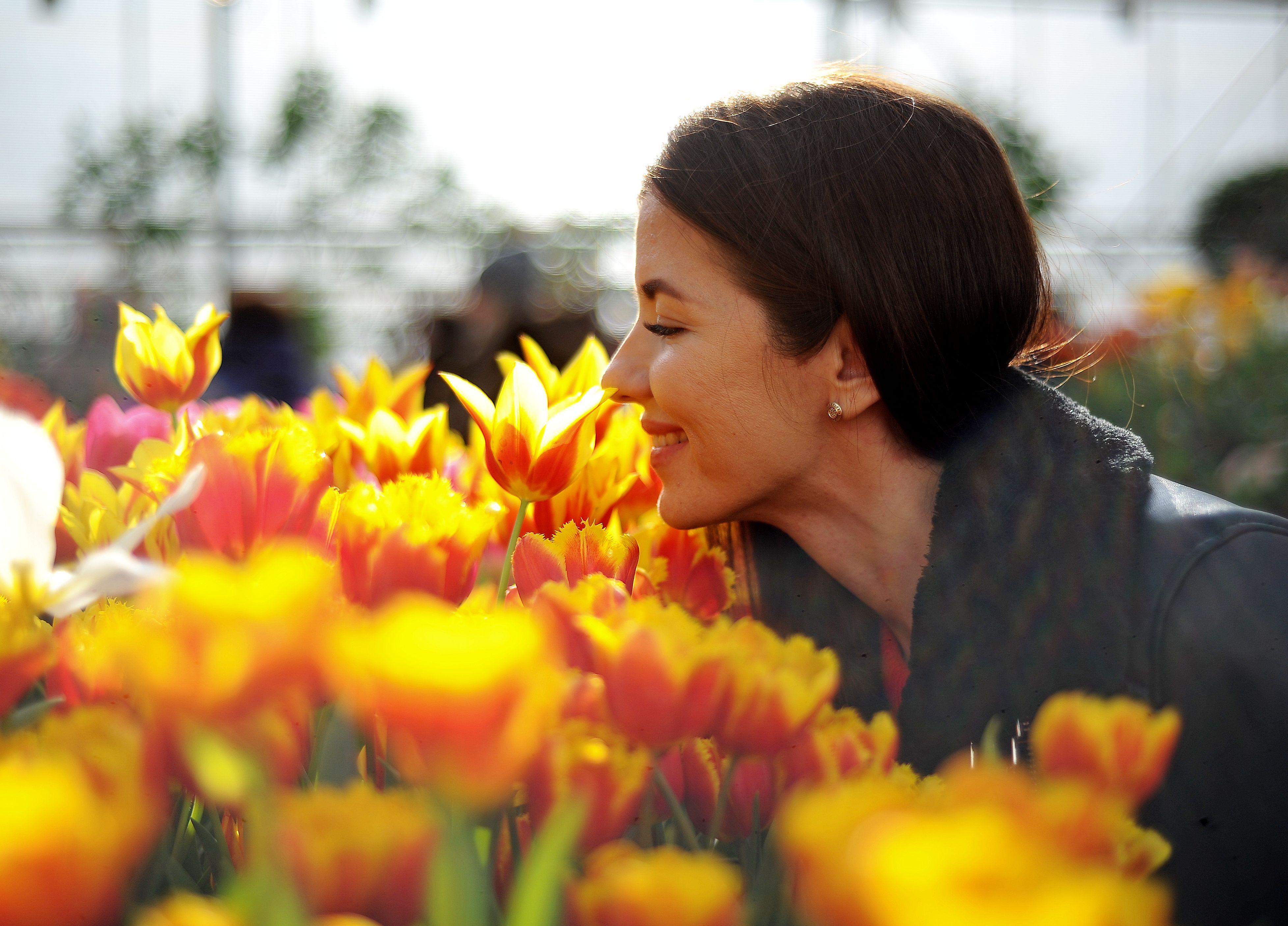 Клумбы Москвы украсят миллионы тюльпанов к Дню Победы