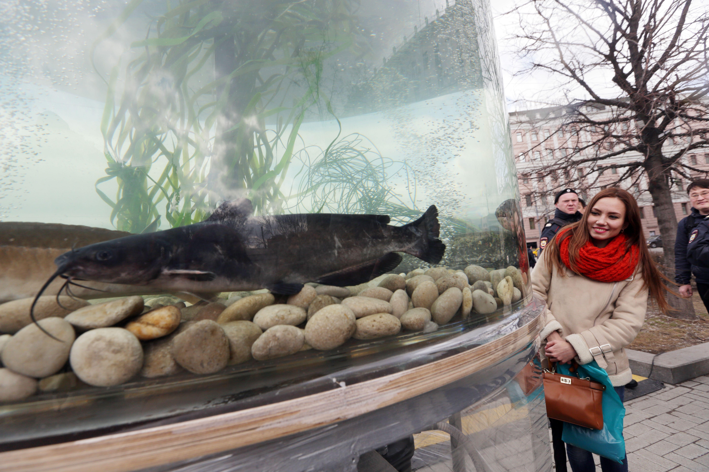 Москвичей пригласили на фестиваль «Рыбная неделя»