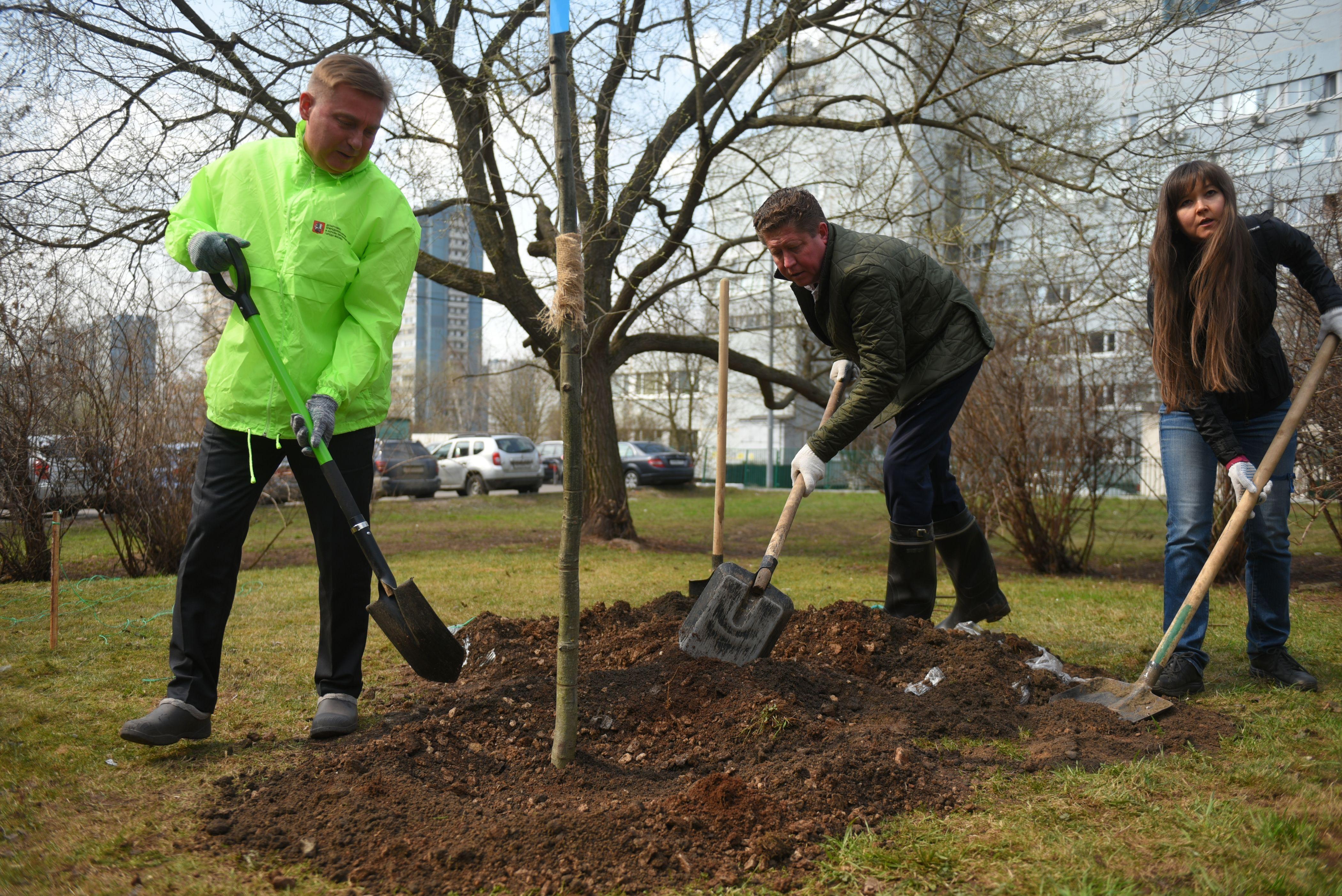 Более ста деревьев посадили в Новой Москве