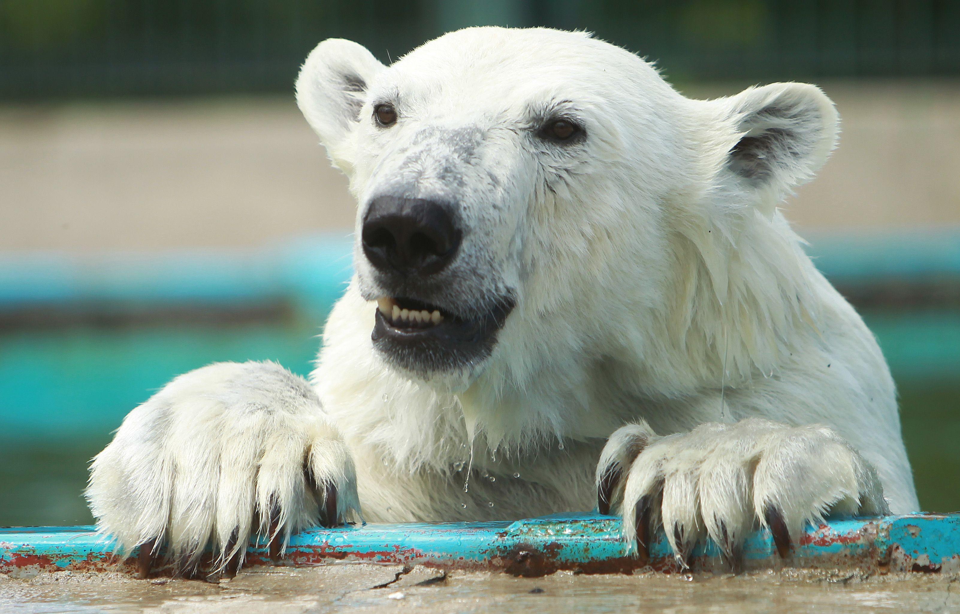 В жаркие дни сотрудники усиливают контроль за самочувствием животных. Фото: Наталия Нечаева