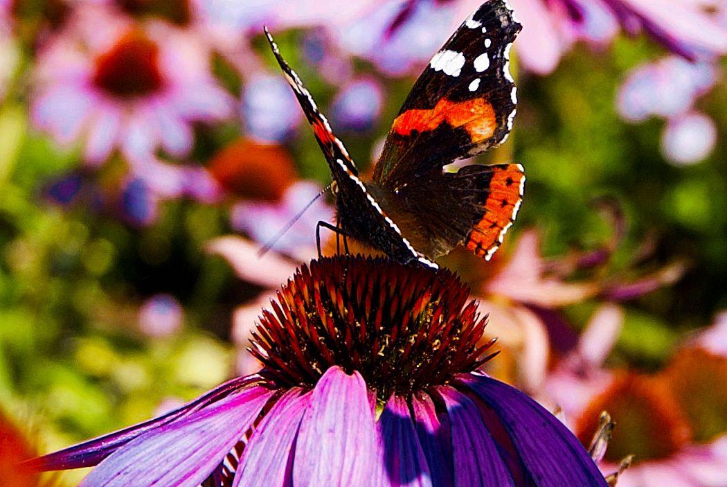 В парке Москвы стартует акция «Бабушки — бабочкам»