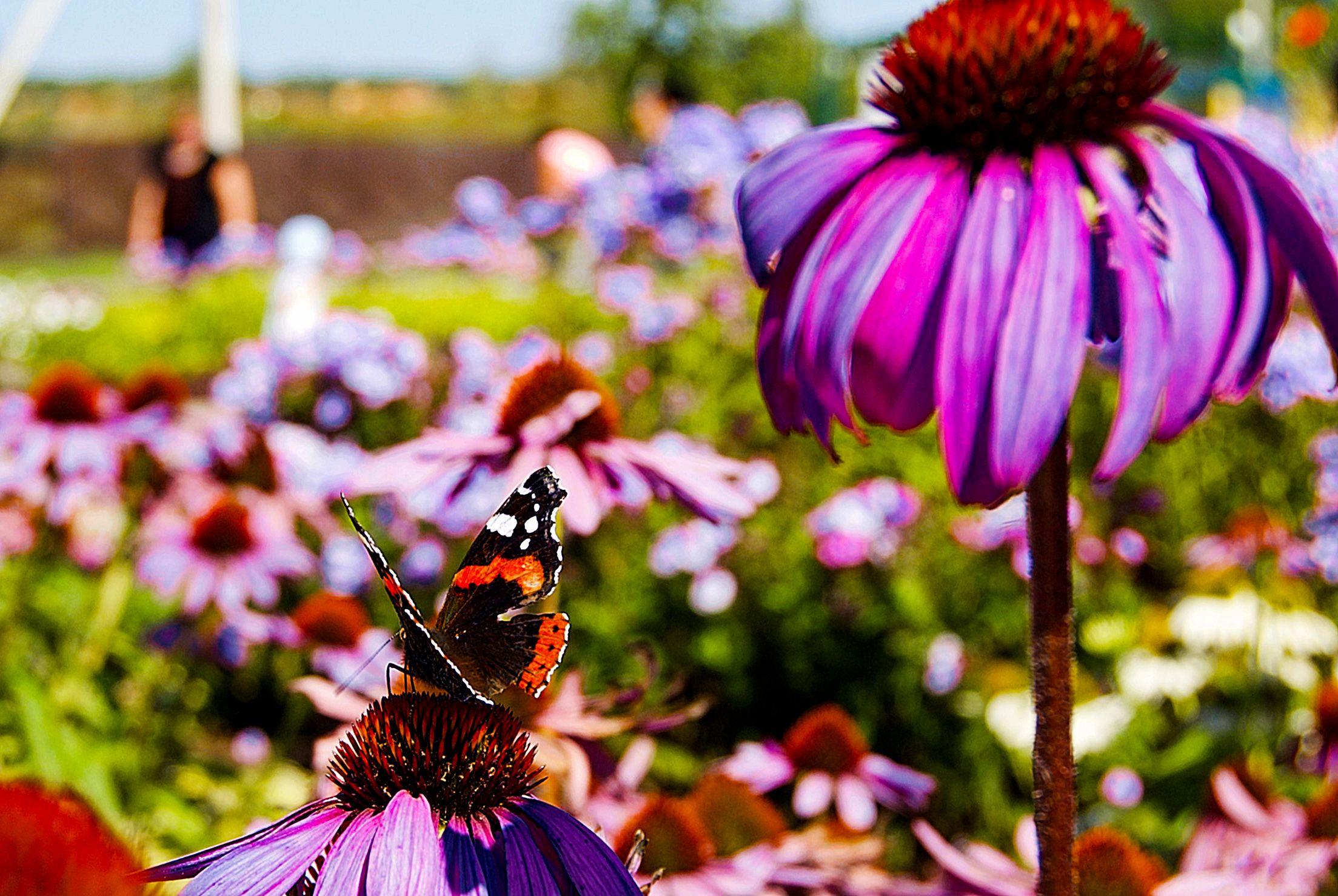 Новые цветы высадят в клумбах на территории Роговского. Фото: Никита Нестеров