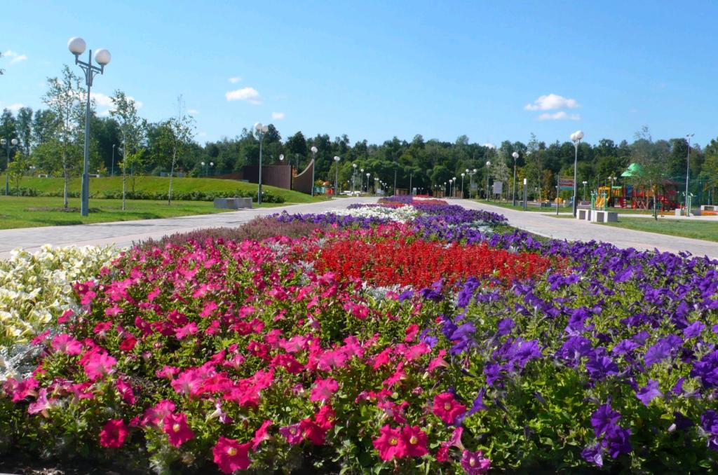 Однолетними цветами украсят парк «Красная Пахра»