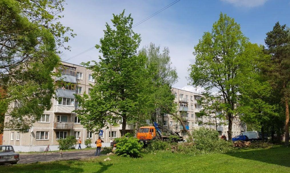 Сухостойные деревья уберут в Кленовском. Фото: администрация поселения Кленовское