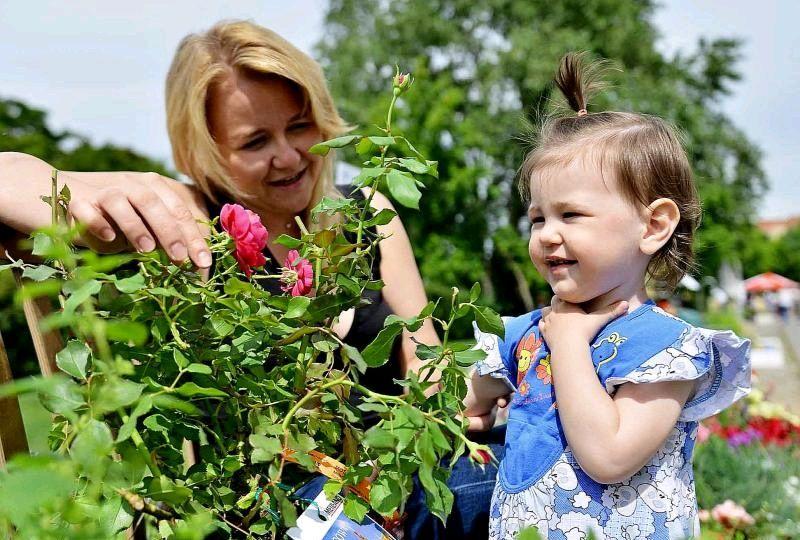 Деревья и кустарники высадят в Москве по инициативе жителей