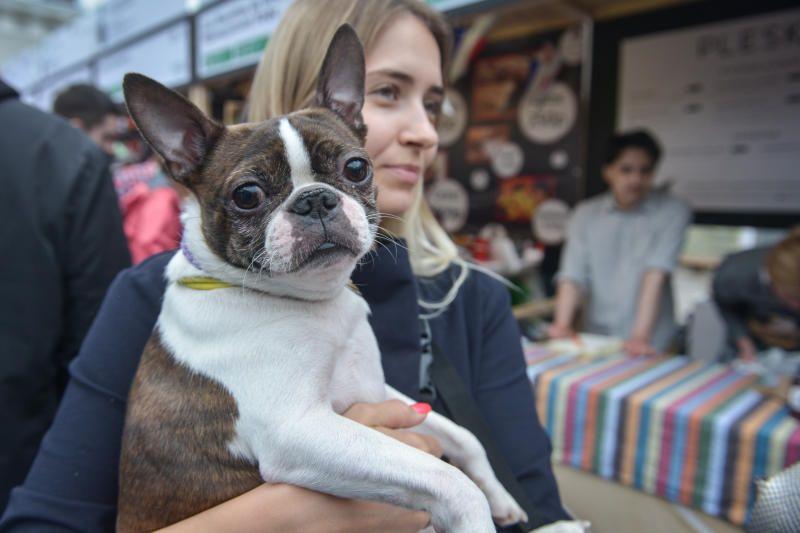 Новых хозяев в рамках акции «Неделя добра» нашли около 150 животных