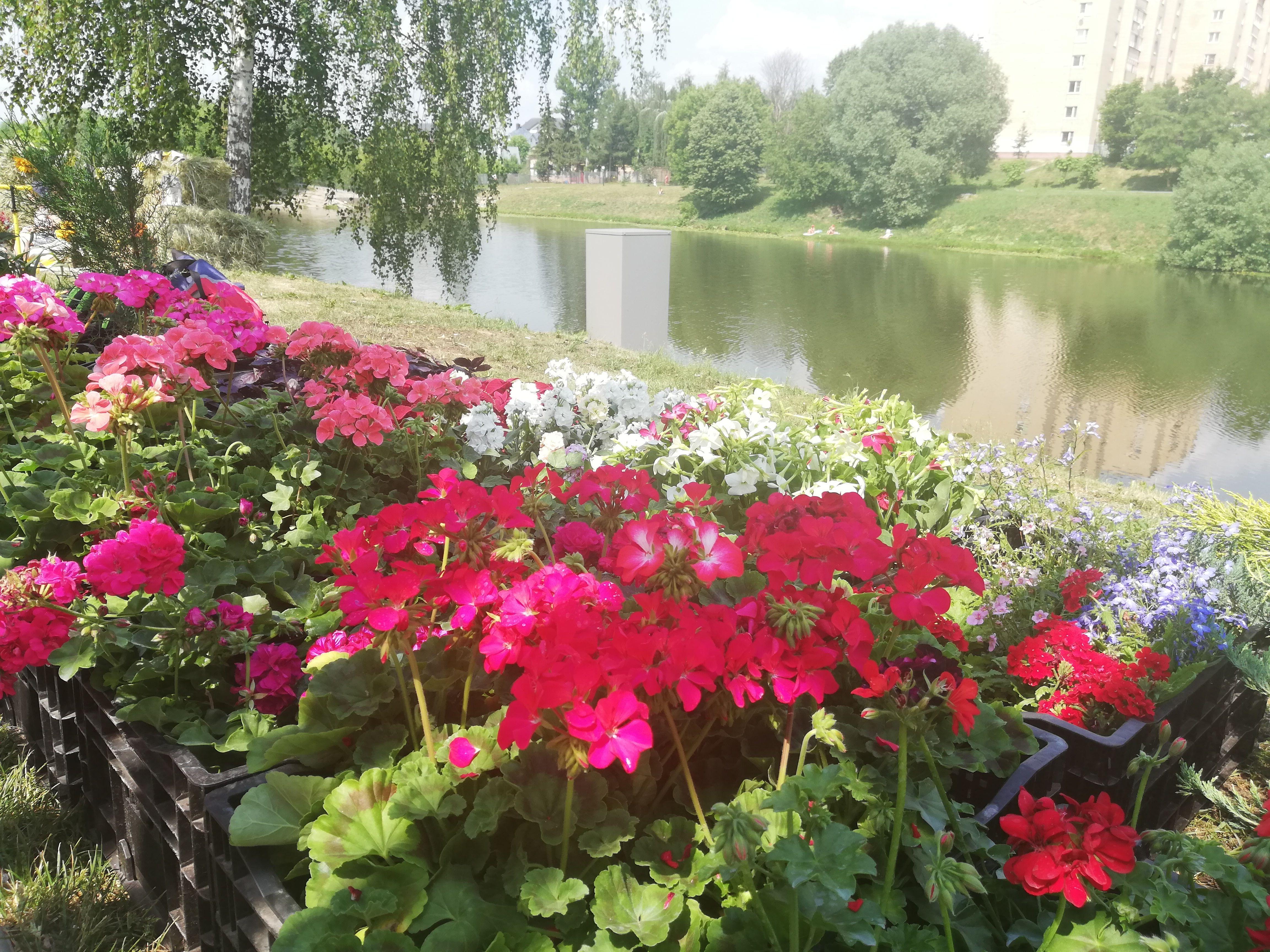 Набережную в Воскресенском украсили цветами. Фото: Анна Лебедева