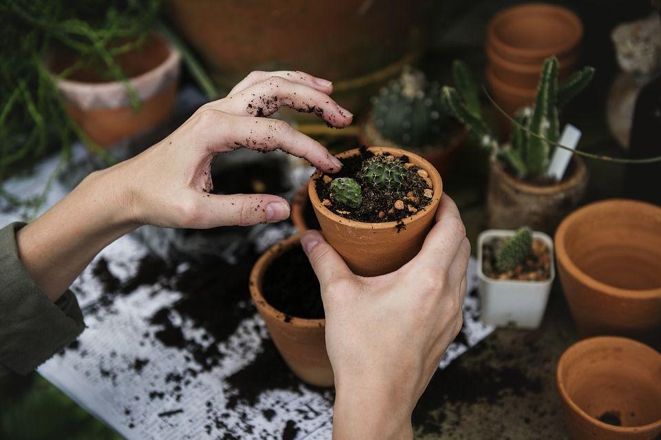 Дети научатся высаживать растения. Фото: pixabay.com