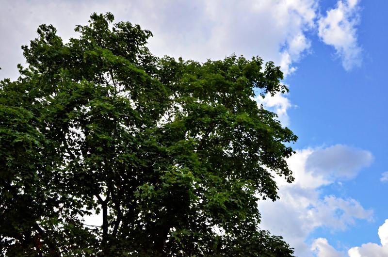 Зоны отдыха с многолетними деревьями создадут в Кленовском