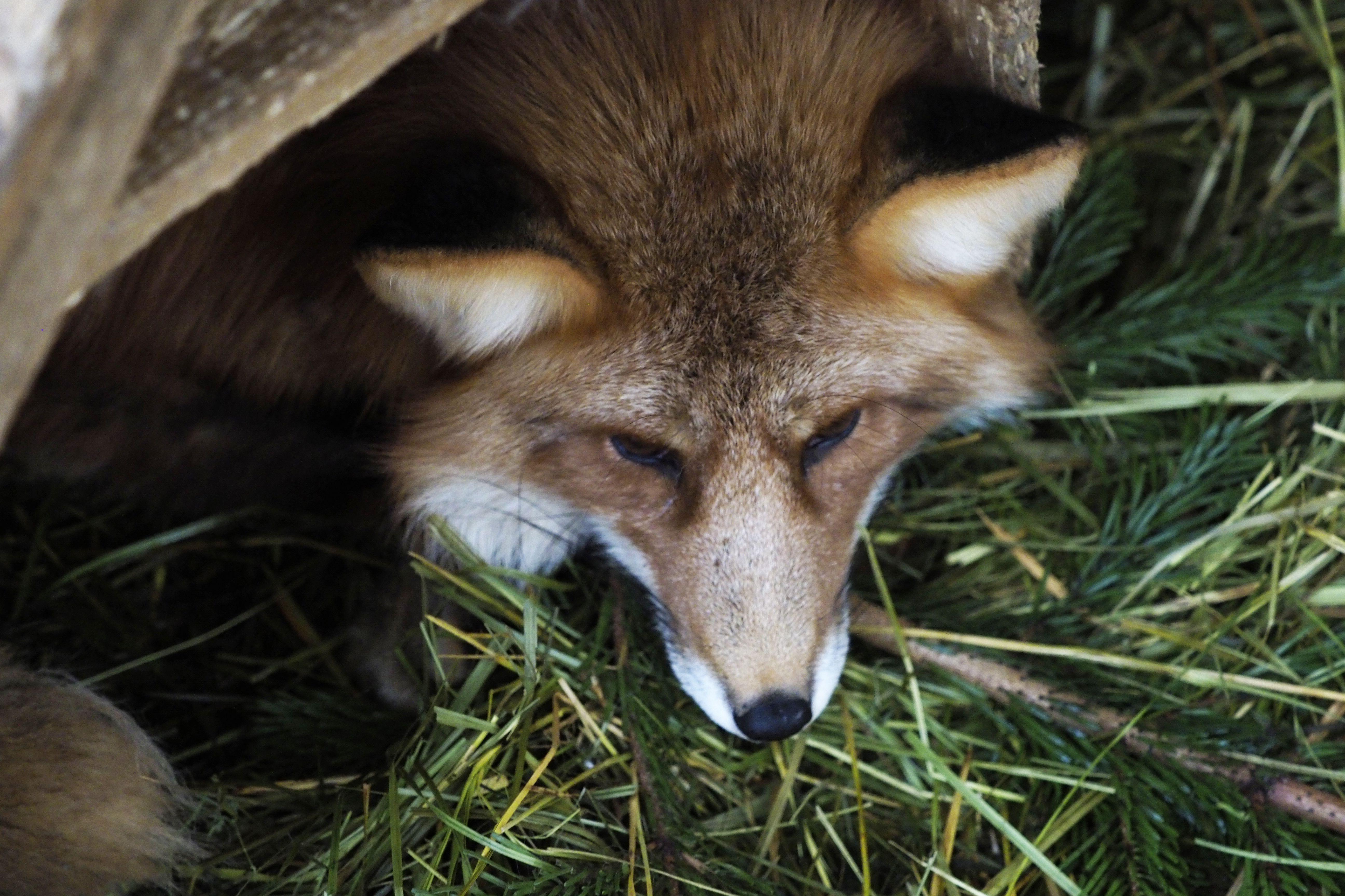 Экологи объяснили появление диких животных в Москве