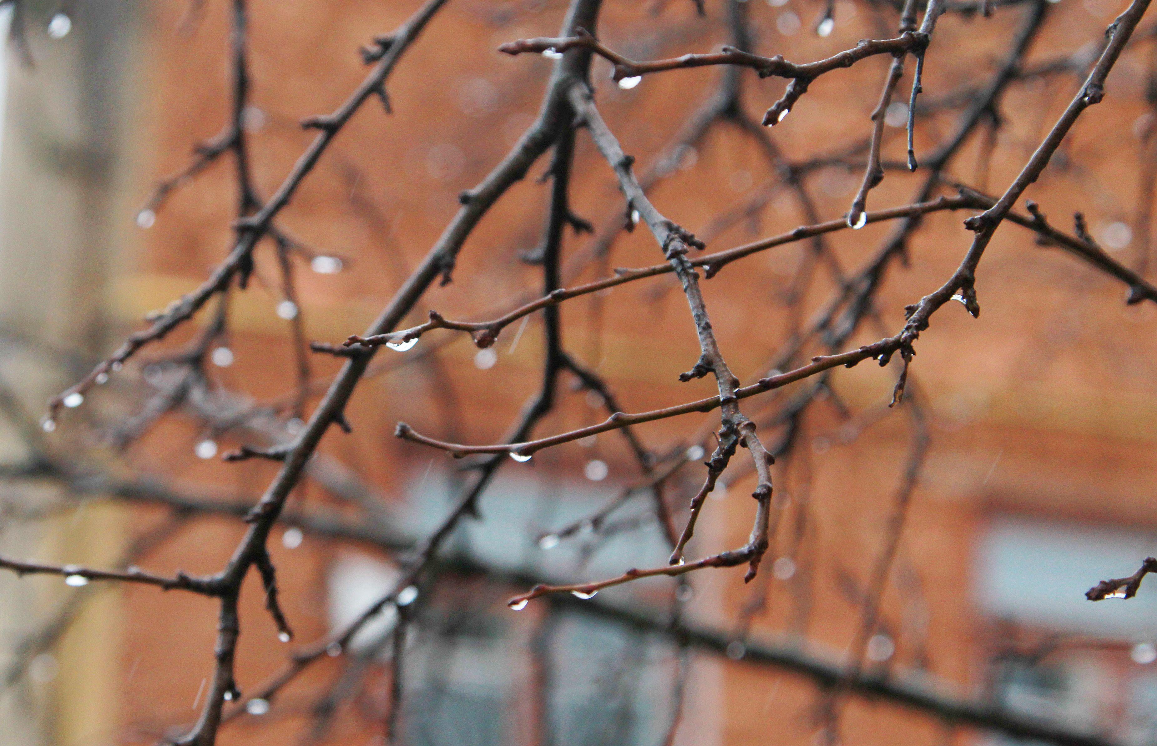 Москвичам пообещали дождь и грозу в среду