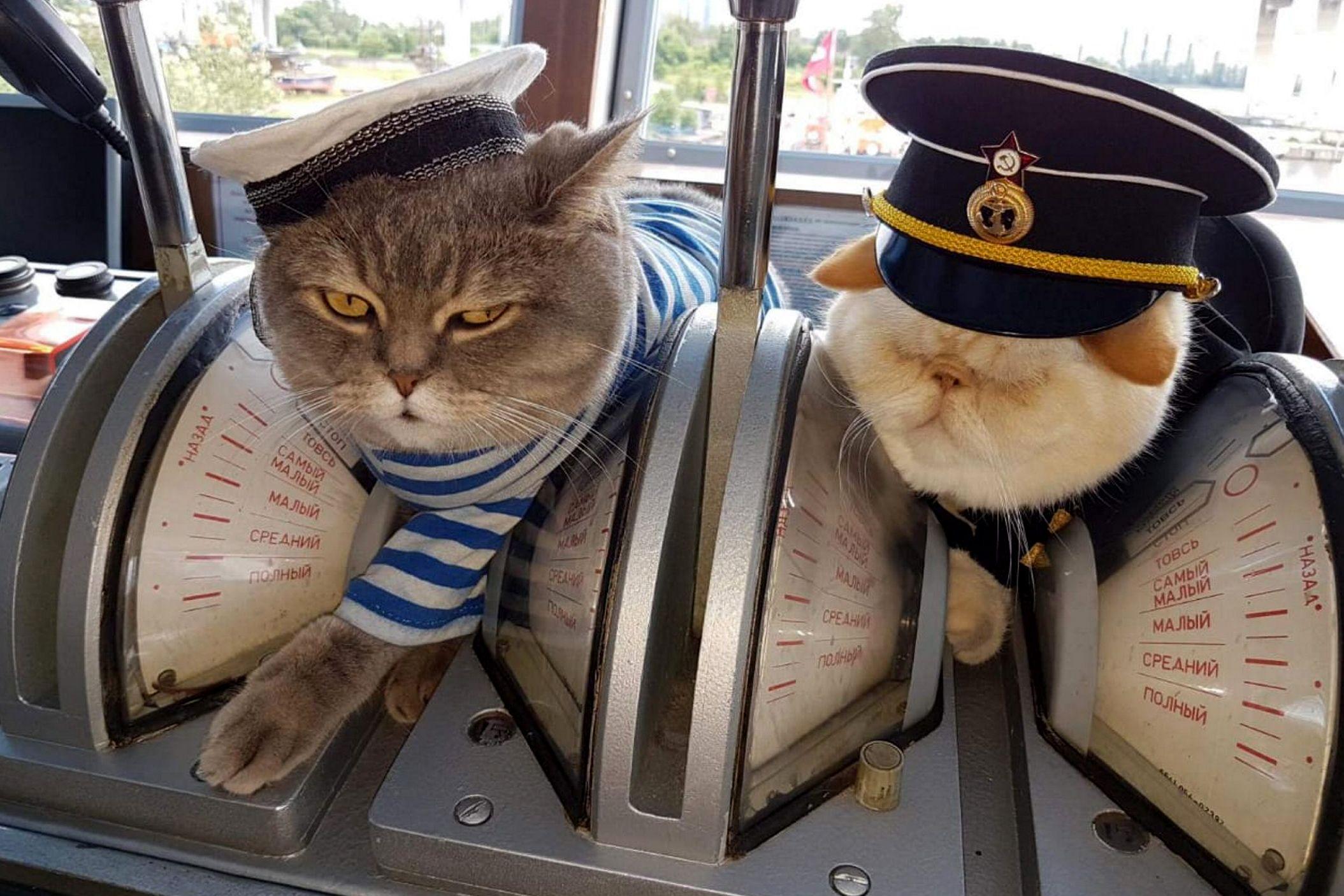 Москвичам рассказали, как спасти домашних животных от ожирения