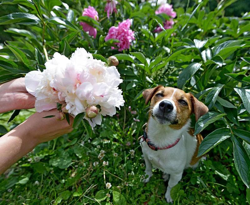 Пожилым москвичам рекомендуют заводить собак мелких пород