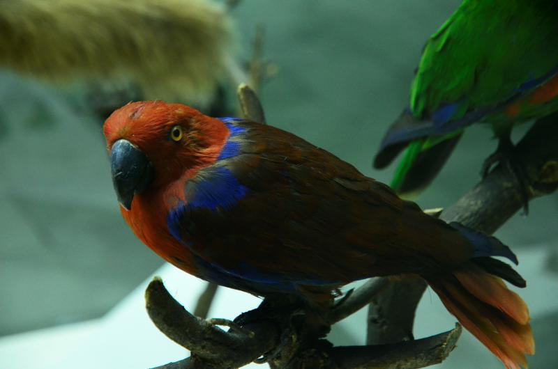 Москвичи чаще всего из экзотических животных выбрасывают змей, игуан и попугаев