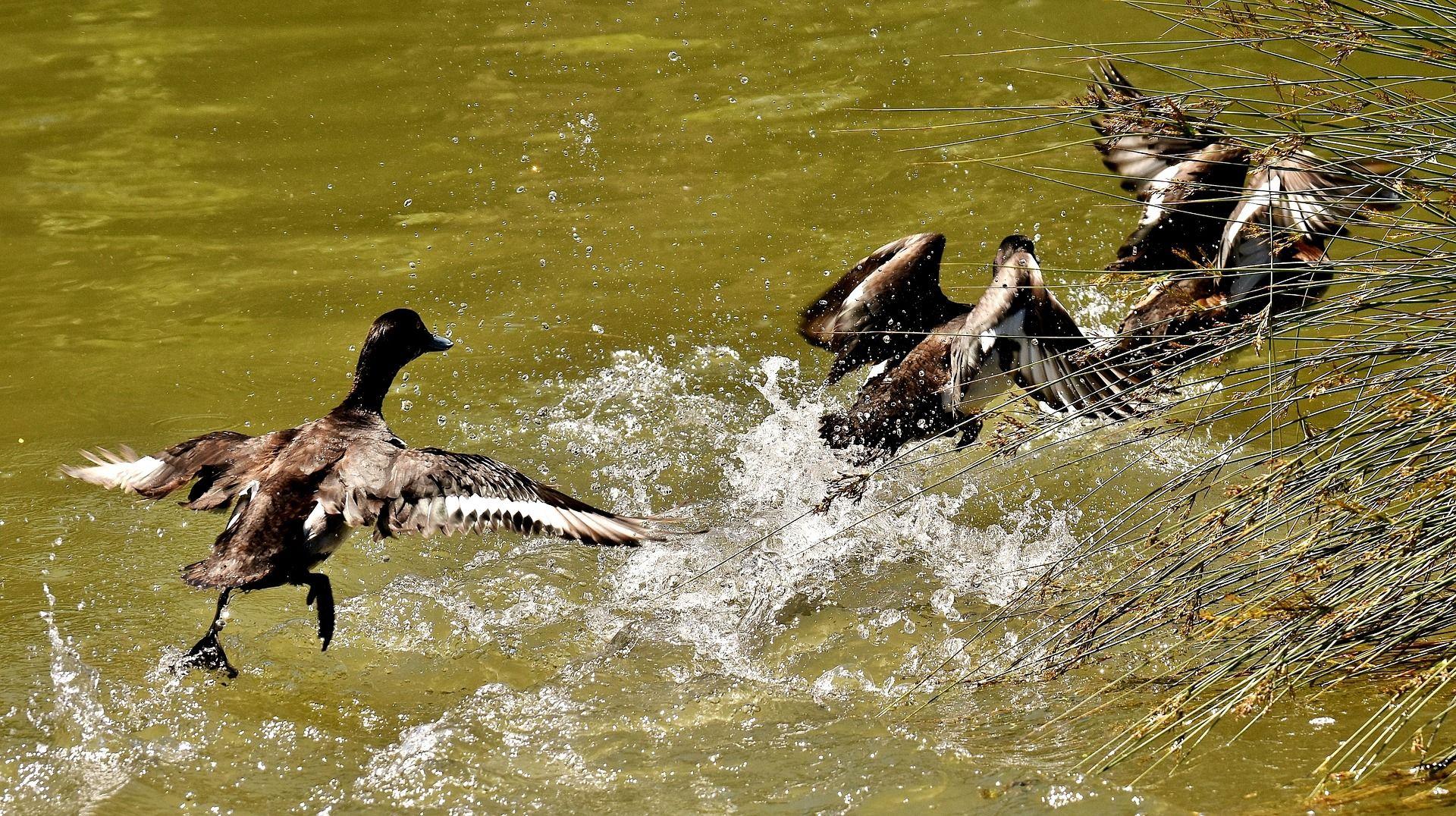 Краснокнижные птицы замечены в Серебряном бору