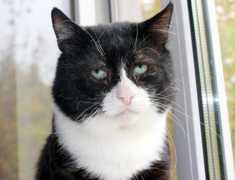 Самый грустный кот Филя из Москвы ищет дом