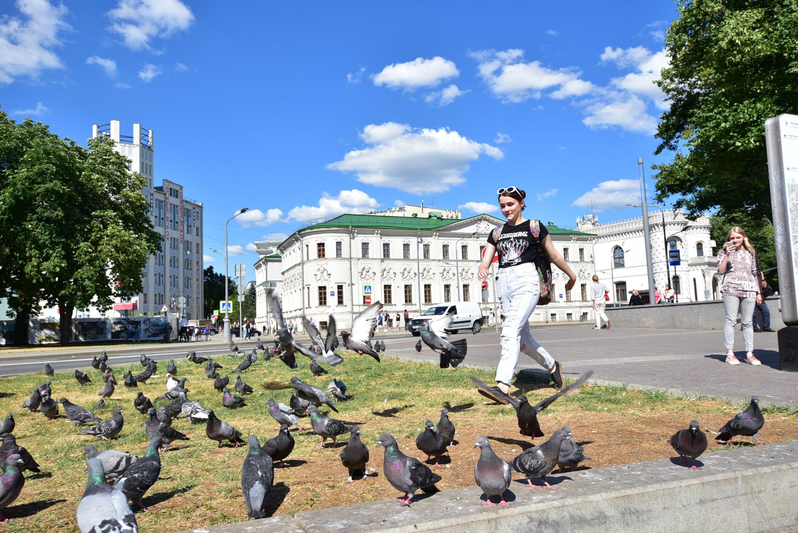 Голуби хорошо освоили городские пространства. Фото: Пелагия Замятина
