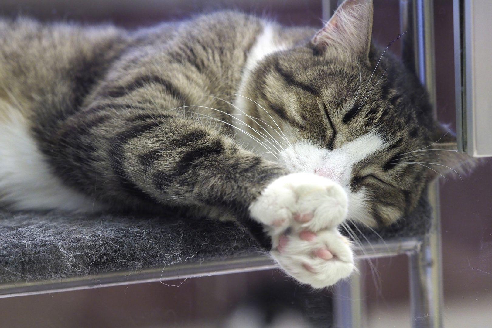 Кошачье мурлыканье благотворно влияет на человека. Фото: Антон Гердо