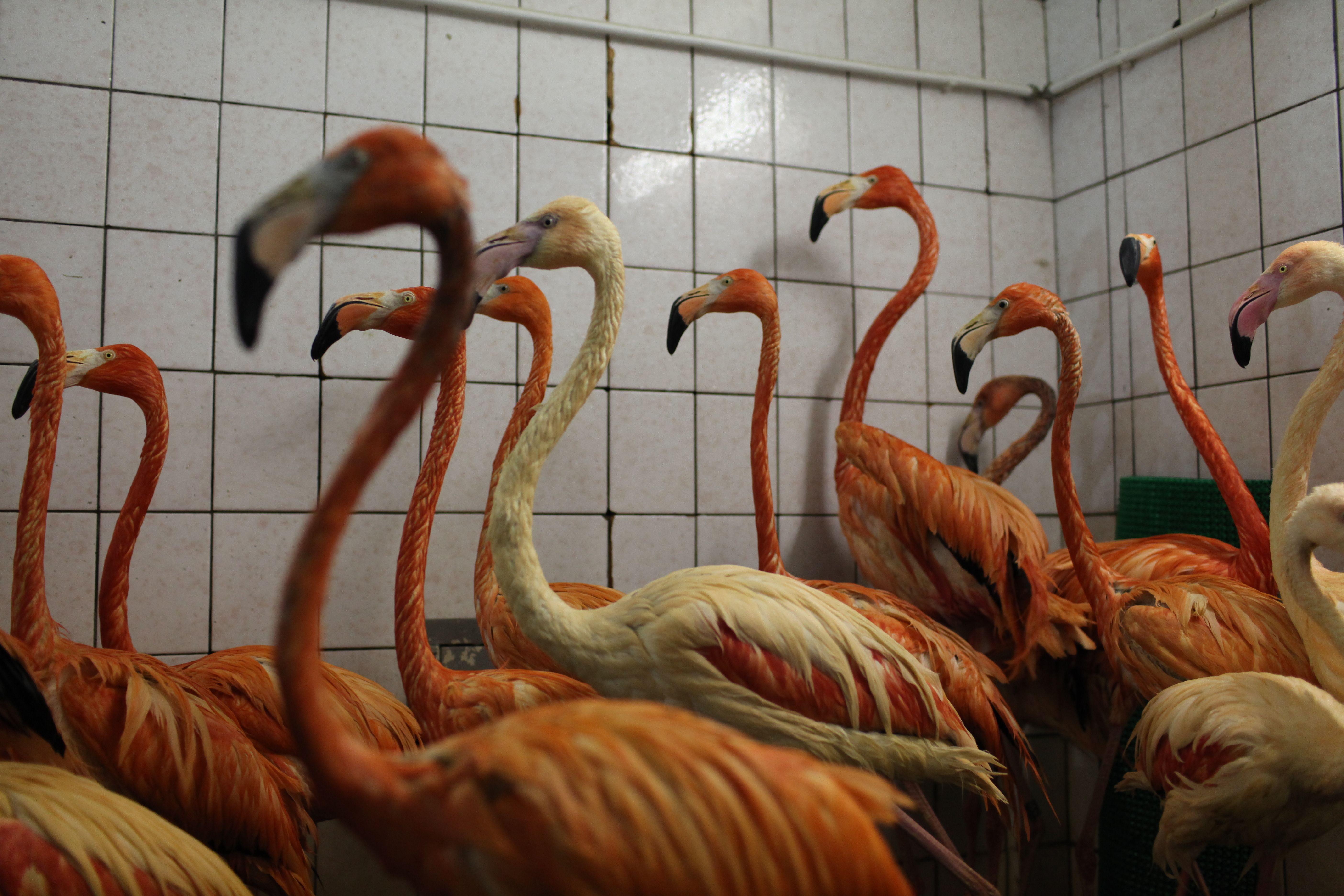 Размножение этого вида в неволе дается непросто. Фото: Наталья Пьетра, «Вечерняя Москва»