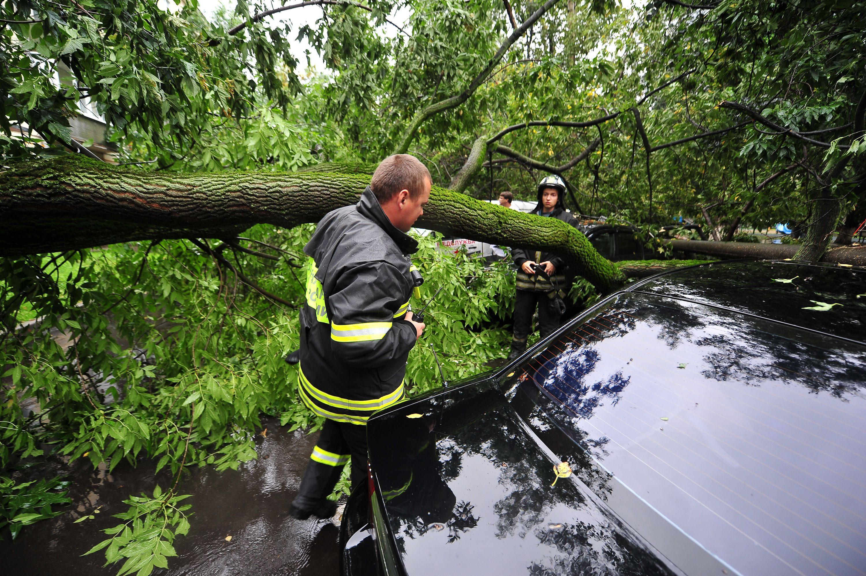 Москвичей предупредили о деревьях, падающих от ветра