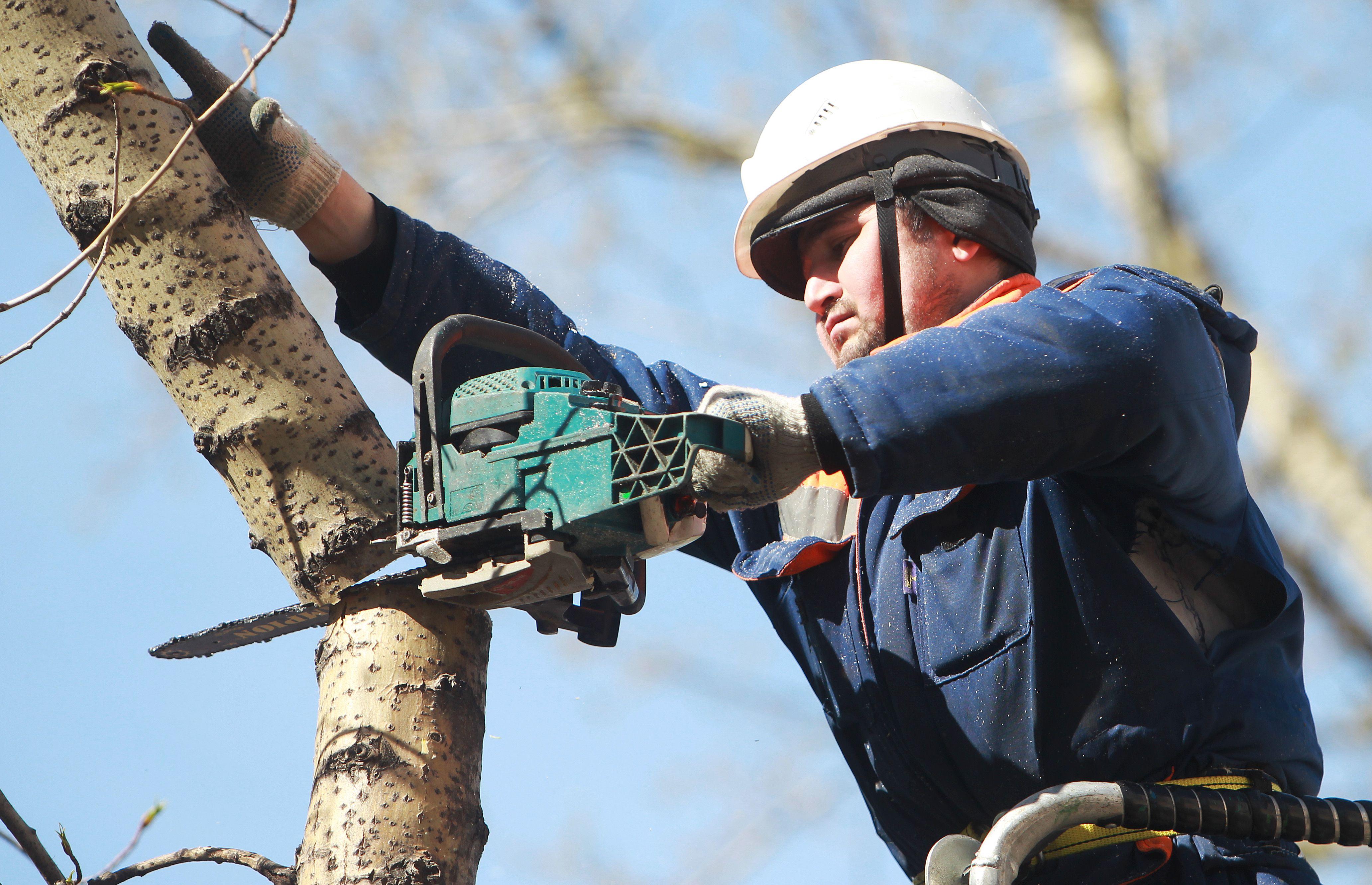 Сухостойные деревья удалили в Новофедоровском