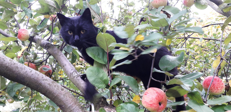 Стоп-кадр: Кот Мурчик, яблочный ревизор