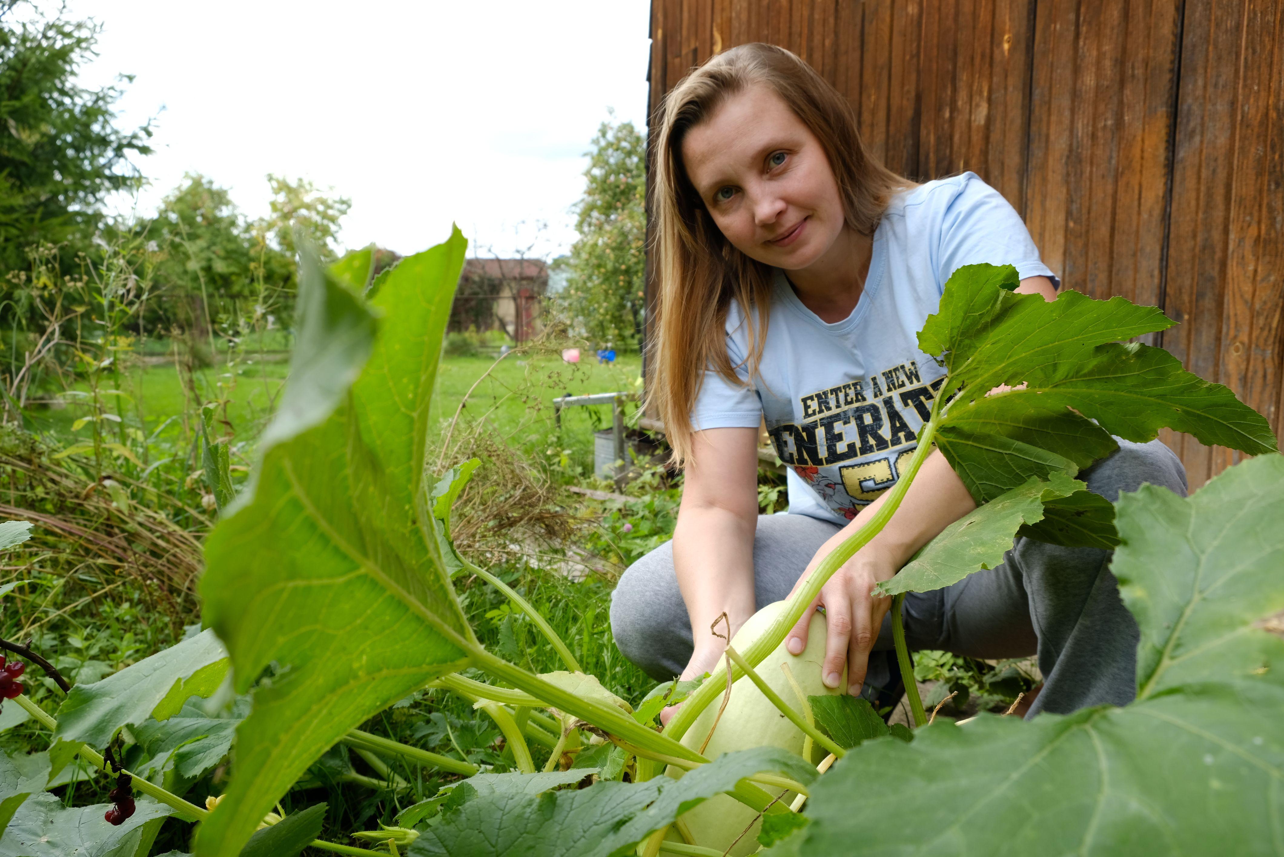 Московским дачникам рекомендовали собрать весь урожай