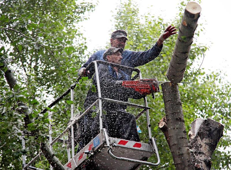 Сухостойные деревья спилили в Щербинке