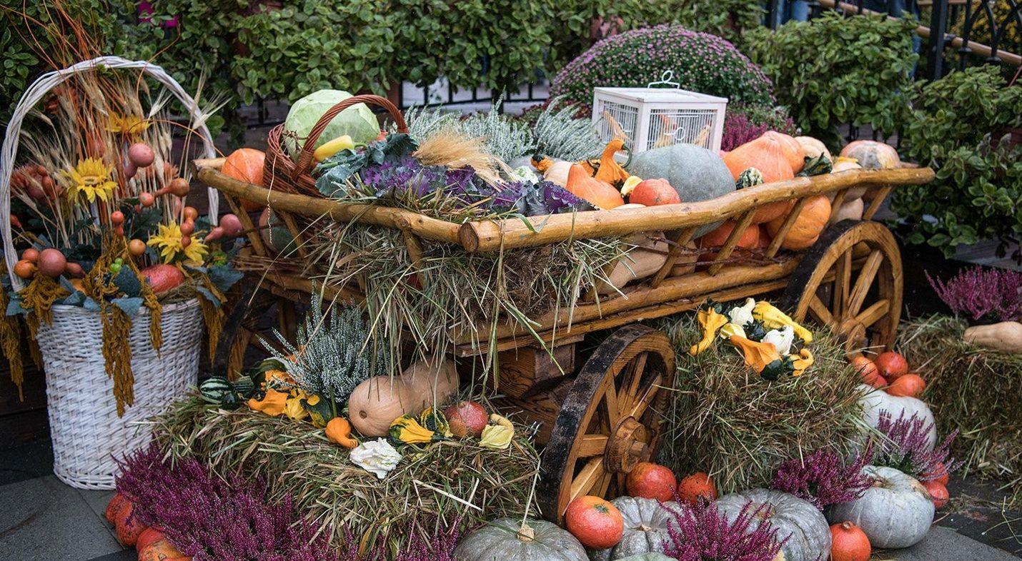 Более 450 кулинарных мастер-классов пройдет на фестивале «Золотая осень»