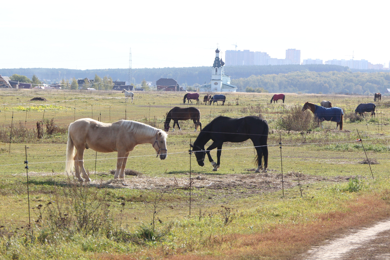 Стоп-кадр: за погодой обратитесь к лошадям