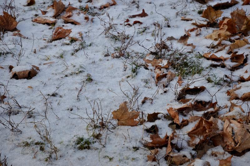 Первый снег ожидается в Москве в воскресенье