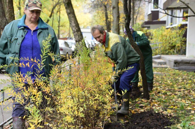 Сухостойные растения обрежут в Роговском