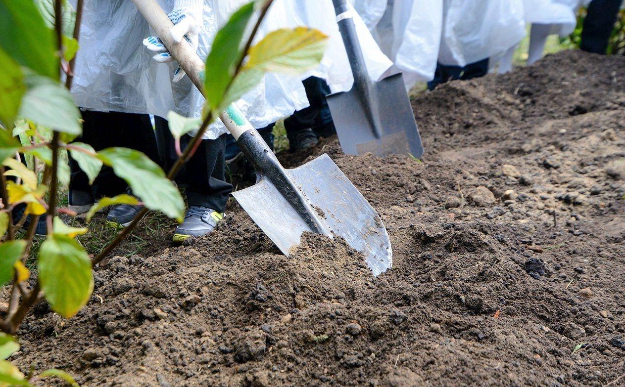 Специалисты высадили более тысячи тюльпанов в Роговском
