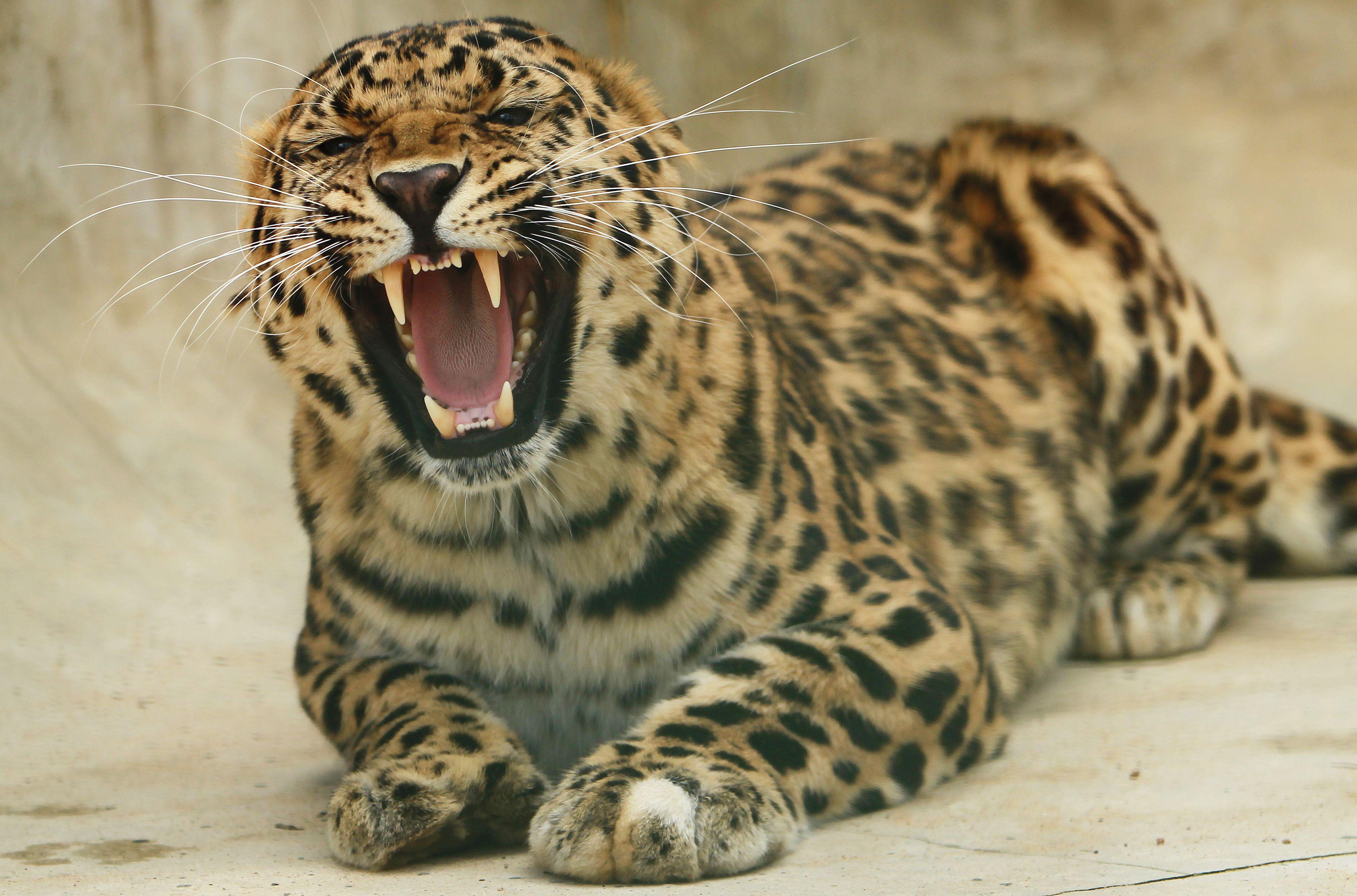 Москва объявила конкурс для спасения диких животных