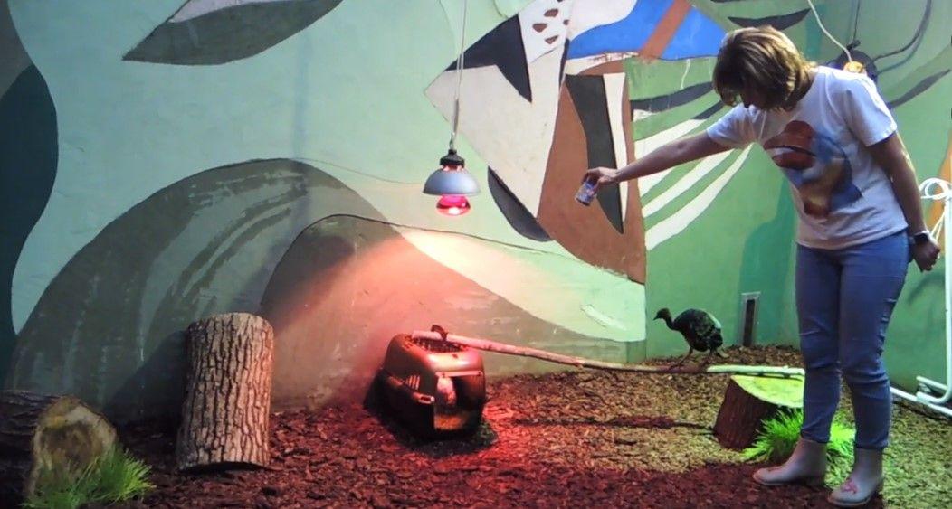Московский зоопарк пригласил посмотреть на птенца-трубача