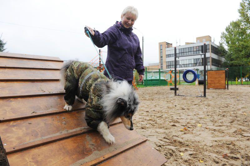 Площадки для выгула собак обустроили в Десеновском