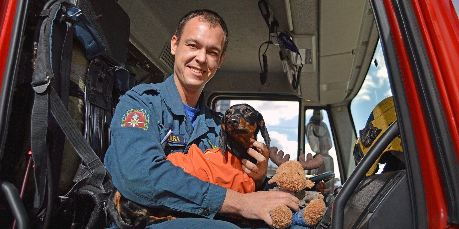 Бесценные специалисты: как работают собаки московских аварийно-спасательных отрядов