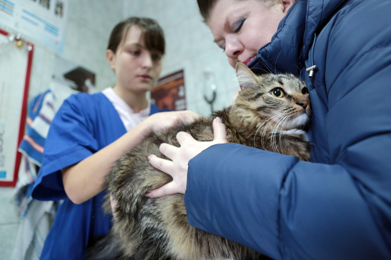 Москвичей призвали вакцинировать питомцев