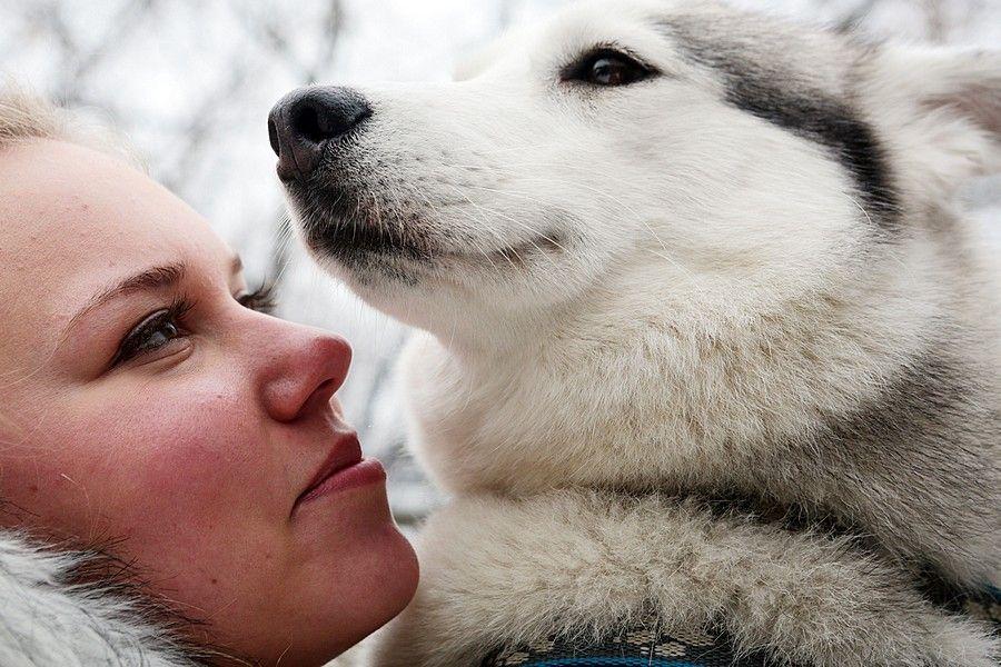 Московские ветеринары рекомендовали не целовать собак и кошек