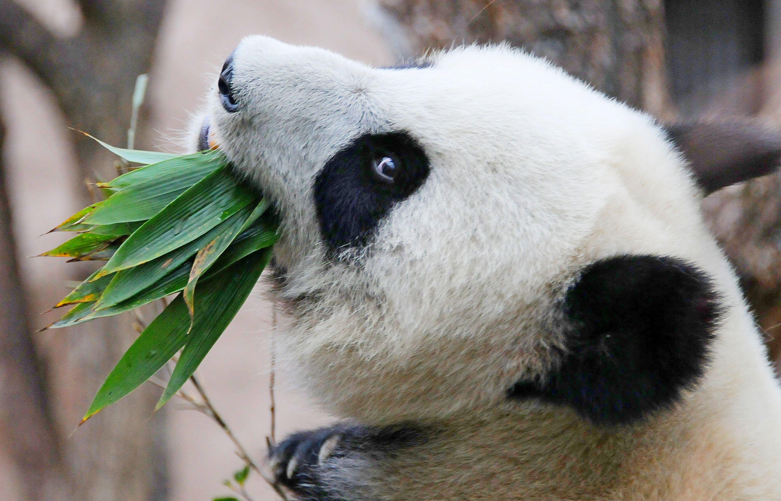 Зоопарк Москвы подготовил двухнедельную программу к Новому году
