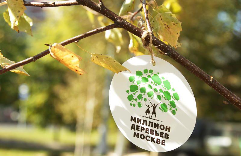 Более 750 тысяч деревьев и кустарников высадят в Москве
