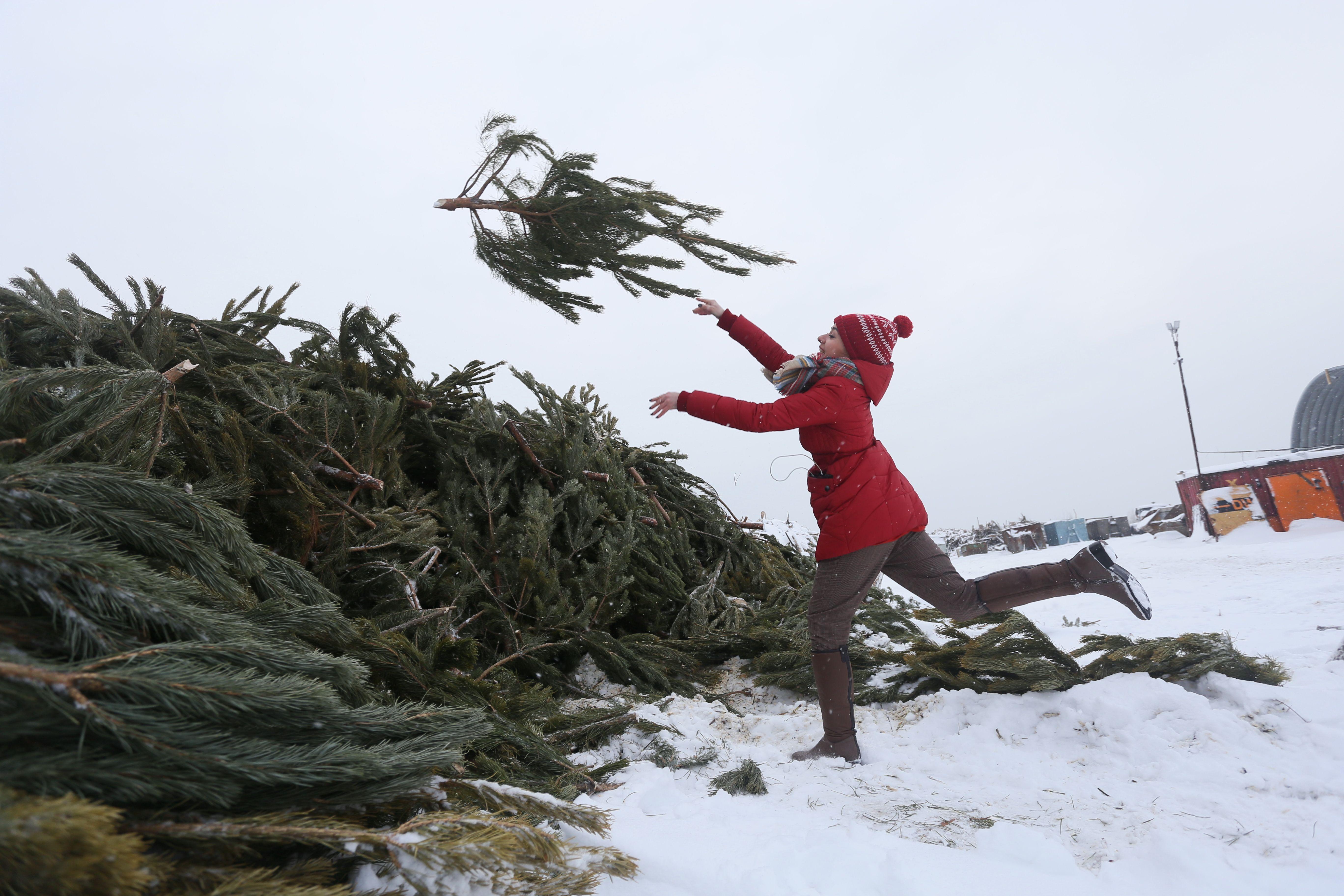Почти две трети москвичей отказались от живых елок в квартире